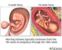 16th week of pregnancy