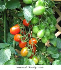 grape tomato plants
