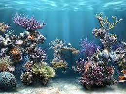 3d fish tank backgrounds