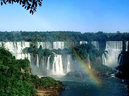 south american jungles