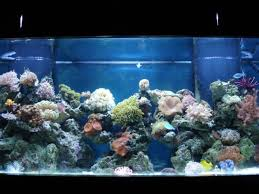 aquariums setups