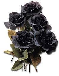 black roses flowers
