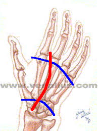 hand intrinsic muscles