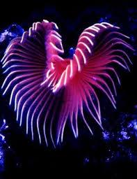 animals in the marine biome