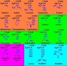 20 aminoacidos esenciales