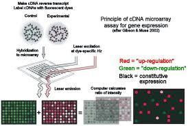 microarray cdna