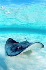 cayman island dive