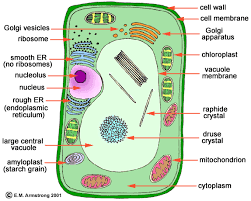 cell plants