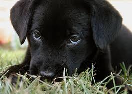cute puppy desktops