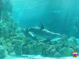 dolphin desktop