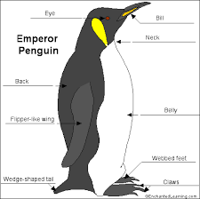 emperor penguin food web