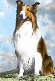 lassie tv series