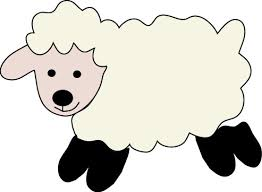 sheep color