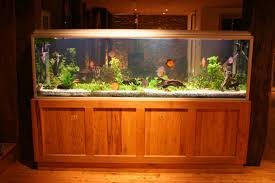 freshwater tropical fish aquarium