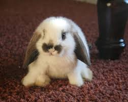 baby bunny pics