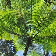 canopy rainforest