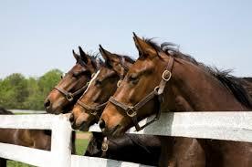 horses fence