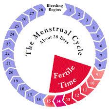 fertile cycle