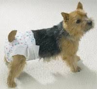 dog nappies