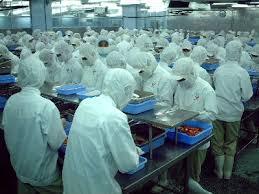 shrimp factory