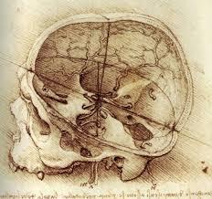 drawings skull