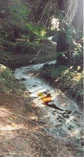 polluted streams