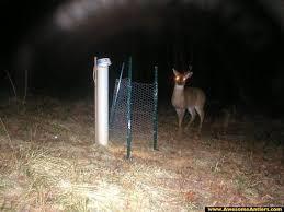 deer antler traps