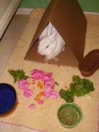 indoor rabbit houses