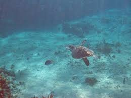 negril snorkeling