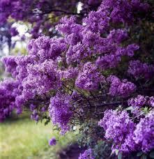 flower shrubs