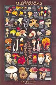 mushroom posters