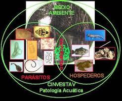 organismos acuaticos