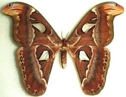 moth images