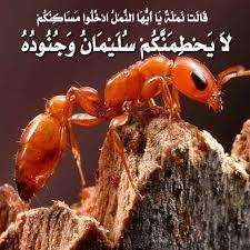 ����� ������� ����� image011ky.jpg