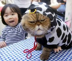 cow kitty