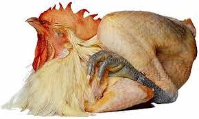 blue foot chicken