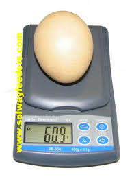 egg scales