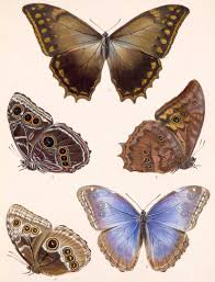 moths butterflies