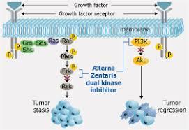 pi3k inhibitor