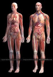 images of human anatomy