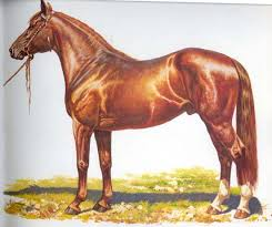 picture horse