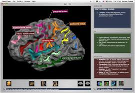 3d brain anatomy