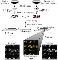 microarray processing