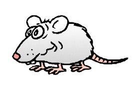 rat gif