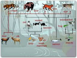 food web for the rainforest