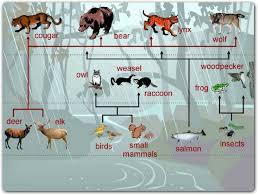 animals temperate rainforest