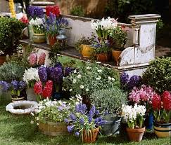 containers flowers