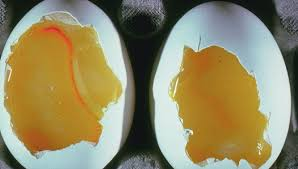 candle chicken eggs