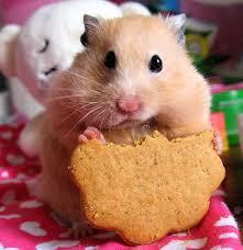 pics of cute hamsters