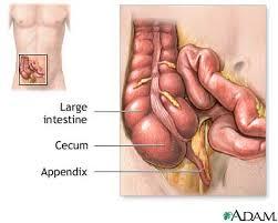 appendix location in the body